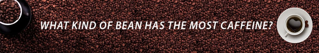 which coffee bean has the highest caffeine content